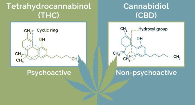 CBD vs. THC molecular structure