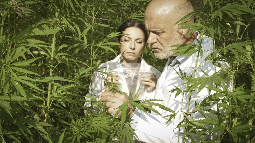 Researchers are constantly studying cannabis as a more natural health alternative